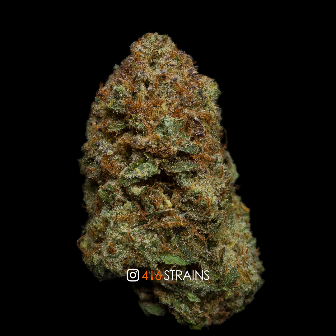 Mimosa (Sativa) - First Class Medicinal - 416Strains ca
